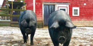 Molly and Charlie at Woodstock Farm Sanctuary